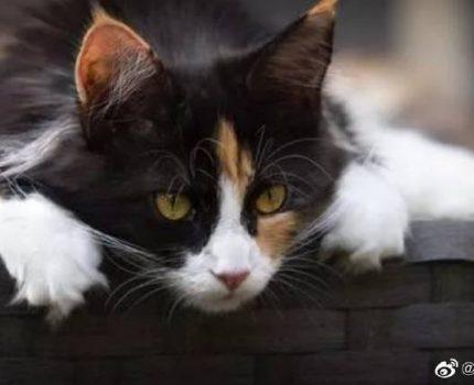猫咪受到惊吓的反应