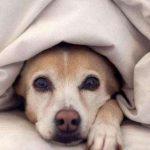 狗狗去世前的这几个征兆你知道吗?
