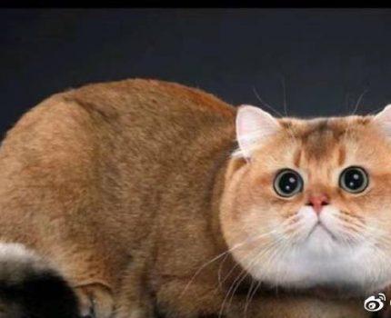 新手养猫的注意事项