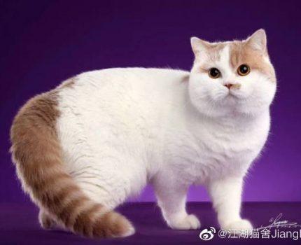 江湖猫舍简介
