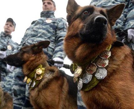 如果狗狗也要参加高考,你家狗狗准备上啥大学?