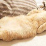 猫咪最爱的是老鼠还是鱼?看完这篇分析,颠覆你对猫的认知