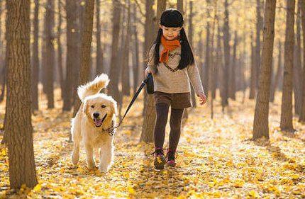 眉山宠物治疗中心教您如何帮狗狗刷牙!