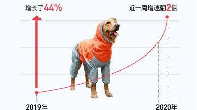 最潮的季节,最潮的崽,考拉海购宠物雨衣暴涨44%