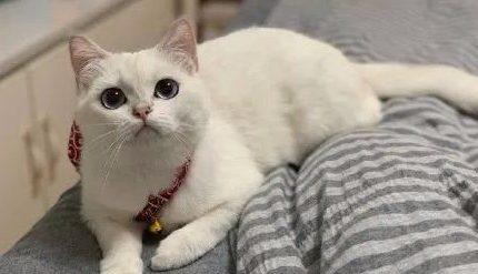 养猫以后,你的生活有哪些变化?