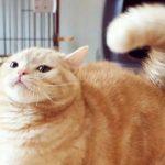 生活是不会为难我这只小橘猫的,毕竟这么可爱~