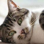 猫:不想努力了,求来个人包养我吧!