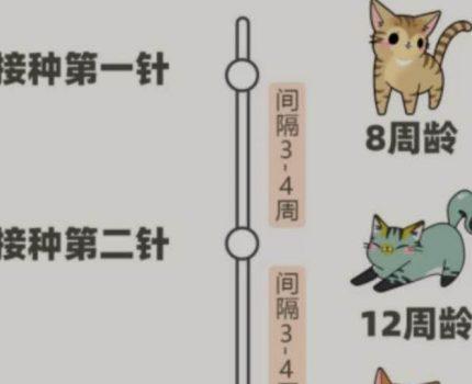 新手养猫咪疫苗指南