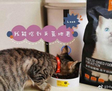 猫猫营养不良该如何是好?选这款猫粮就好了