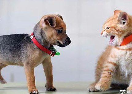 到底是猫更聪明,还是狗更聪明?