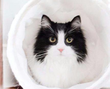 养奶牛猫吗,比抽盲盒还刺激的那种?