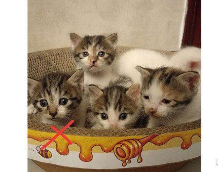 〖今日领养〗可爱小奶猫对外领养预定