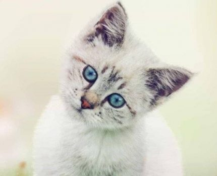 可怜的猫咪也有可恨之处