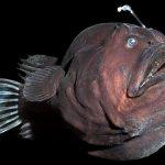 观赏鱼如何分辨自己的主人,鱼缸里咋辨认同伴?揭晓它们的秘密