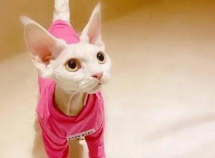当红明星家养的猫,谁家猫是你的菜呢?