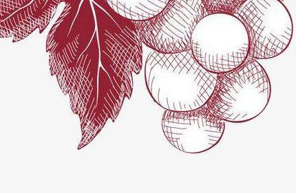 勃艮第葡萄酒的酿造