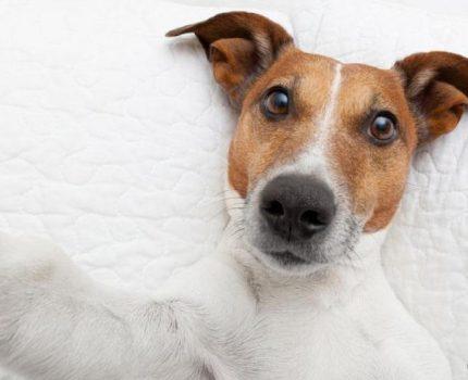 狗狗常见的行为和情绪背后的原因