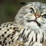 把猫脸P在人身上后,网友:有鬼啊!