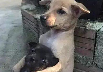 暖哭了!被救下的动物们紧紧抱住救命恩人