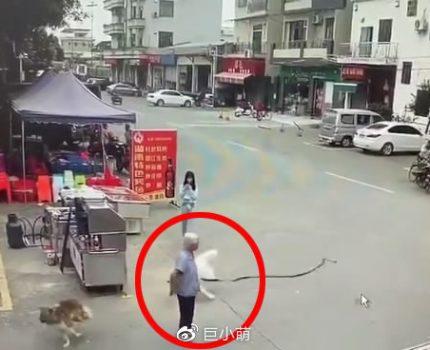狗狗暴冲追逐打闹,把老人180度拉倒,头撞地鲜血直流