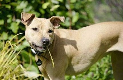 带狗狗出去时,狗狗为什么会突然吃草?