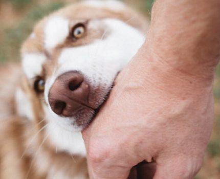 狗狗为什么会突然攻击主人,原因无非是这四个