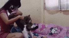 公猫和母猫谁更黏人?(无歧视)