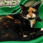 猫咪每天就爱逛超市,当地无人不知,如今被撞身亡,没法立雕像?