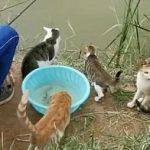 钓鱼时引来一群猫咪围观,男子满脸愁容:给的压力太大了吧