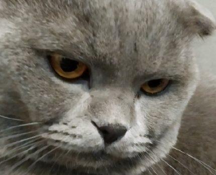 被自己宠爱的猫咪伤到,是谁的错?不纠正,以后还会受伤的