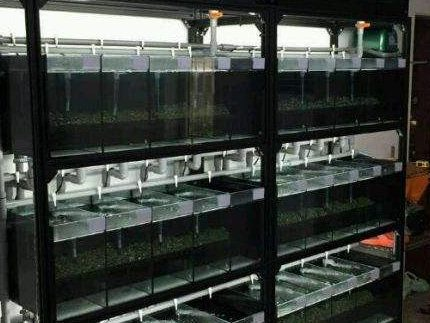 专题解析,养观赏鱼鱼缸如何选?系统鱼缸和单品鱼缸养鱼的区别