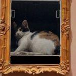 墙上挂了一幅猫咪画像,路人走近一看