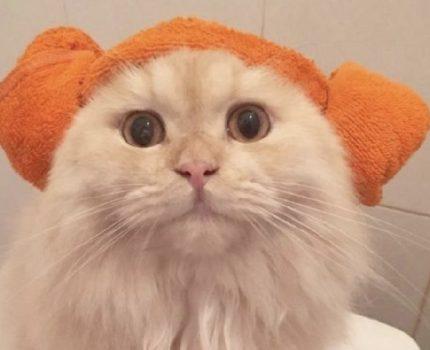 竟然有洗澡这么乖的小猫咪!我酸了!