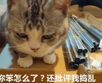 手残党被猫咪逼着组装了置物架,就是猫毛有点多