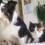 狗失去同伴后抑郁了,见到长得相似的猫后,立马又精神了!