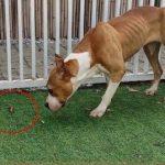 狗改得了吃屎:全面剖析狗吃大便的原因,附解决方法