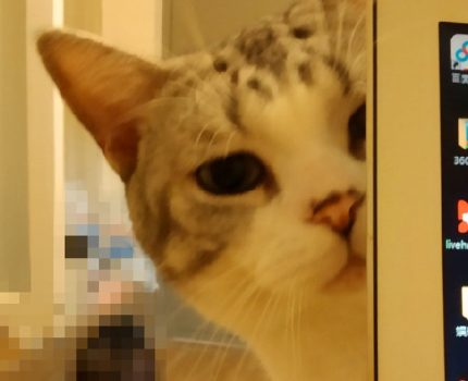 猫岁数大了就不爱动?可能只是因为你不了解猫