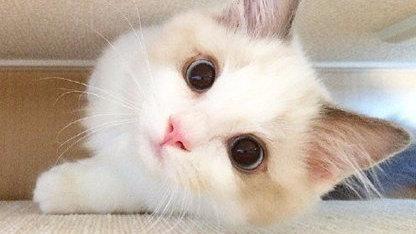 金斯瑞科普|为什么有的人天生就会被猫咪亲近呢?