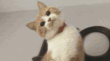 猫咪表示好感的办法