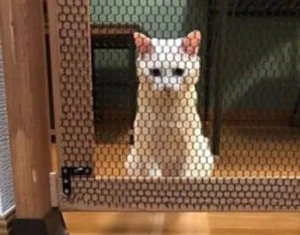 猫爱进厨房捣蛋,主人定制防猫门阻止,结果却出人意料!