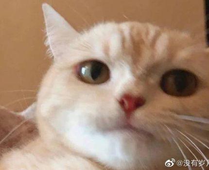 随记 8.5 《到底怎样才是爱猫》