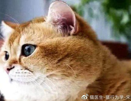 小猫咪在成长中要学会哪些技能?