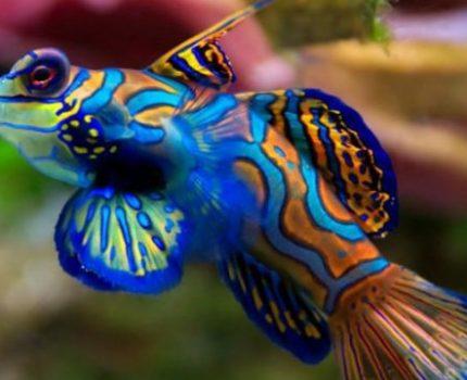 你的鱼儿一直萎靡不振?那么应该是出这些问题了!