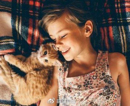 猫爱主人吗?研究表明超出您的预期
