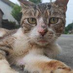 家中来稀客:有一田园猫,携子到此安新家!