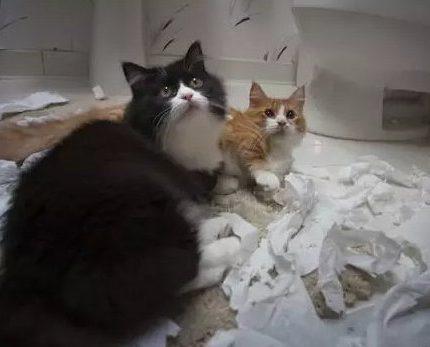 自从养了猫,我上厕所都没纸用