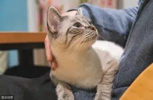 优质猫粮怎么挑?一篇文章告诉你,别再跟风别人买猫粮