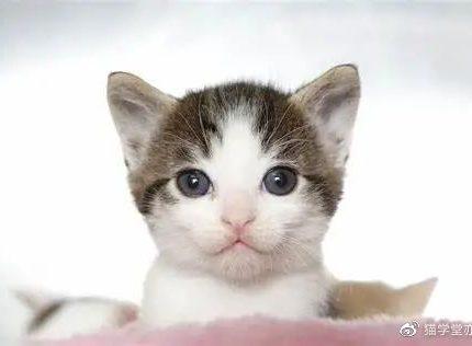 如何教会小猫使用猫砂盆?