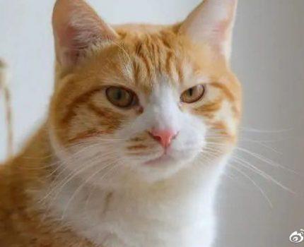 网友捡了只橘猫,本以为自己要当妈了,结果直接变成奶奶