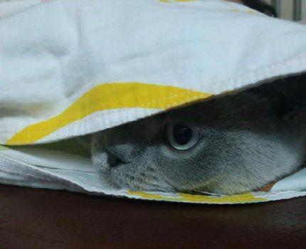 【人生感悟】猫(二):你是它的全部